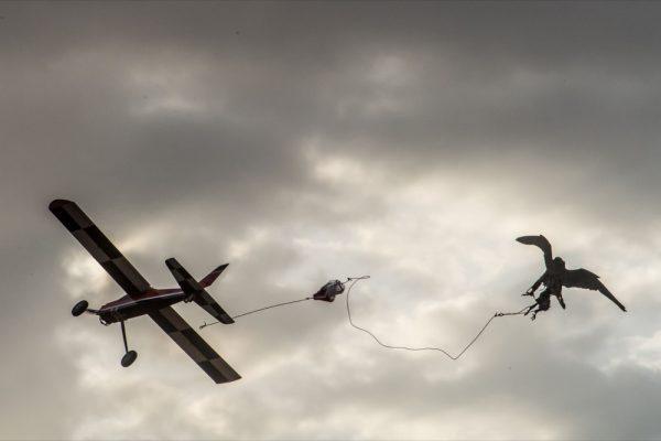 """الطيارة اللاسلكية تدشن المنافساتبطولة فزاع للصيد بالصقور """"التلواح"""" تنطلق 30 ديسمبر الجاري"""