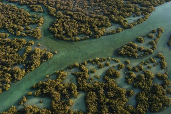 أشجار القرم مصدر الإلهام الفني
