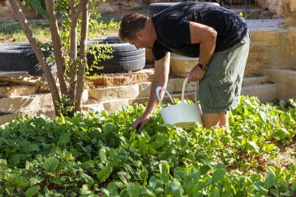 مبادرة الحياة المستدامة: تعزيز الوعي بقضايا الأمن الغذائي